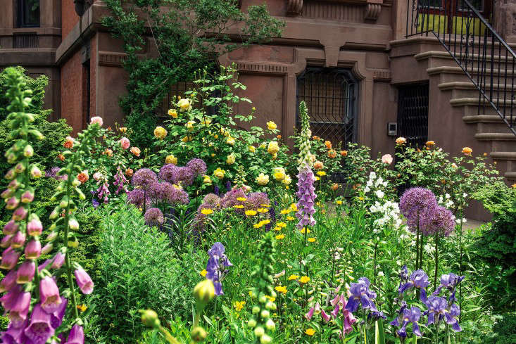 sidewalk-gardens-new-york-front-garden-foxgloves-roses-brownstone-gardenista (1)