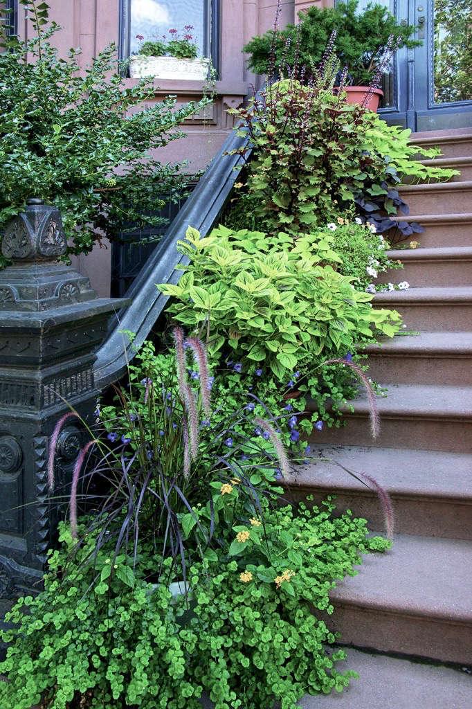 sidewalk-gardens-new-york-stoop-brownstone-railing-townhouse-gardenista