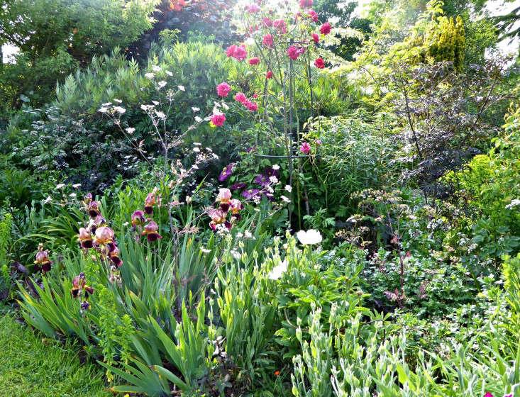 tattenhall-gothic-flower-border-irises-gardenista