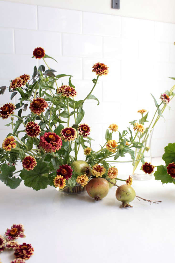 In \1930, he introduced the new zinnia with great fanfare (for years he announced the company&#8\2\17;s newest offerings at events he held in a ballroom in the Waldorf-Astoria Hotel in New York). By the way, he named the new hybrid Zinnia &#8\2\16;David Burpee&#8\2\17;.
