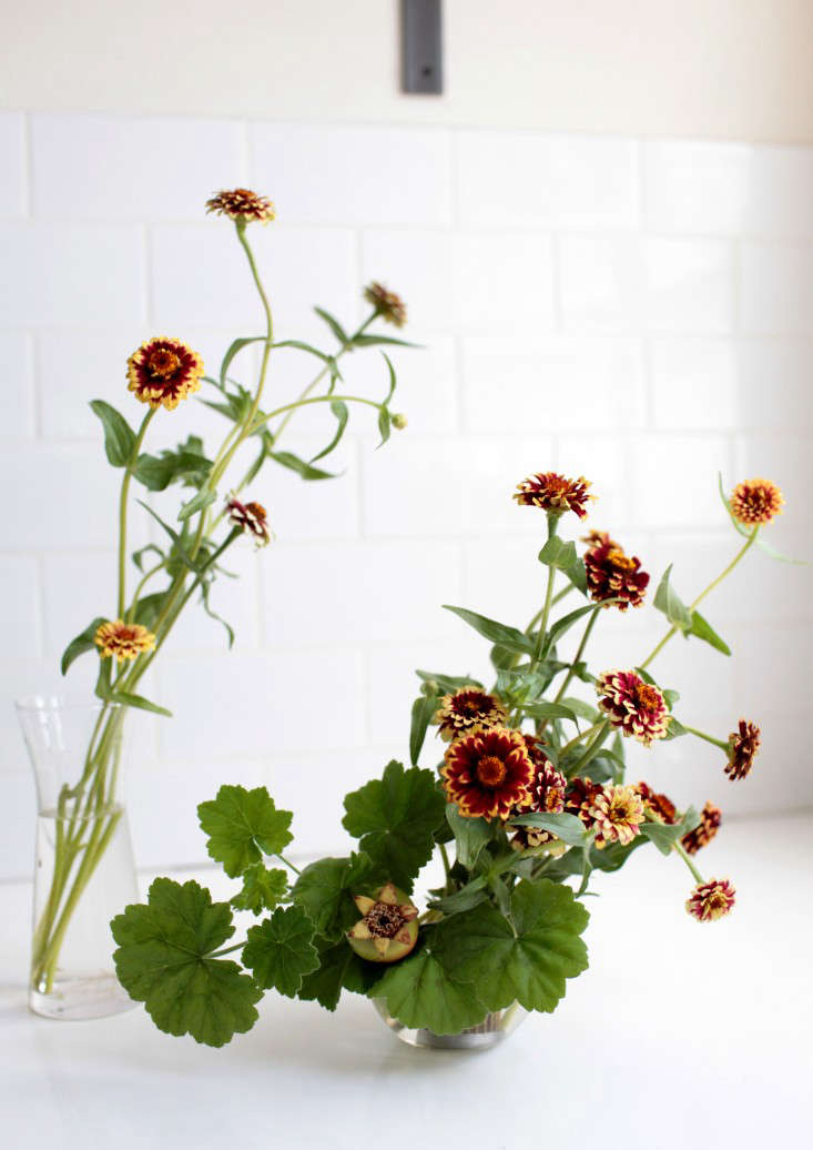 Native to Mexico and Central America, zinnias love heat and direct sunlight. Are you smitten yet?