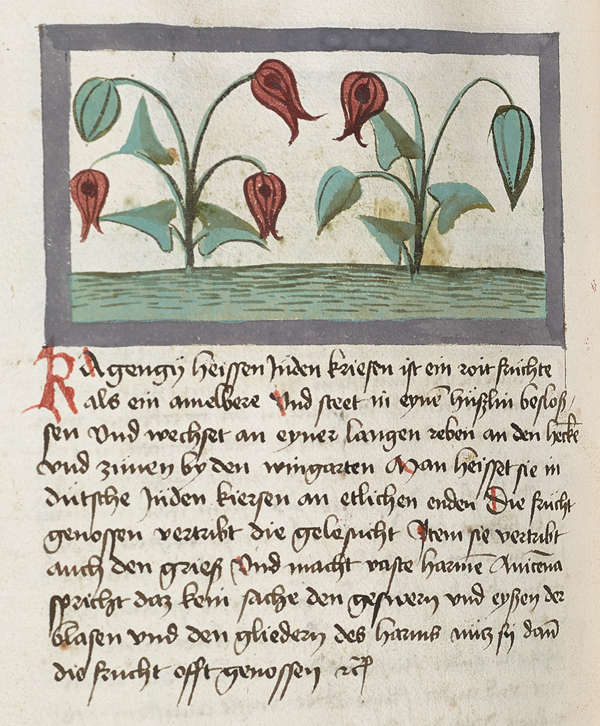 Mellon collection Megenburg page from book watercolor NYBG