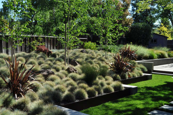 blue fescue is backlit in a generous planting bed