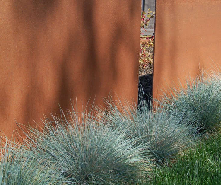 Blue fescue lines a Corten steel fence in a modern application