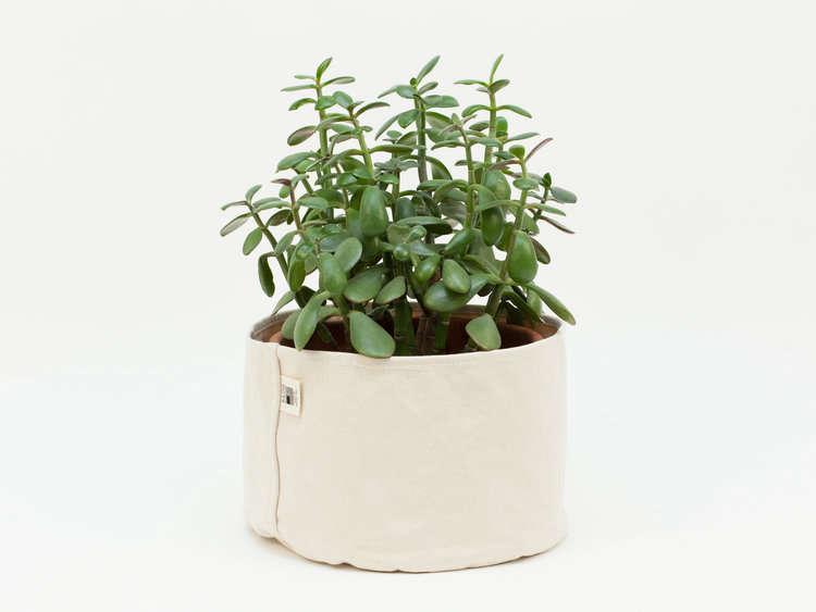 canvas-planter-set-jade-plant