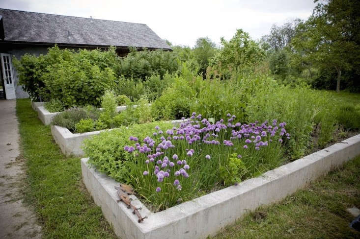 Chives and other herbs grow in raised beds made of poured concrete at Kurtwood Farms on Vashon Island, where restaurant owner Kurt Timmermeister collects and reuses rainwater that drains from downspouts into a galvanized trough. Photograph courtesy of Kurtwood Farms.