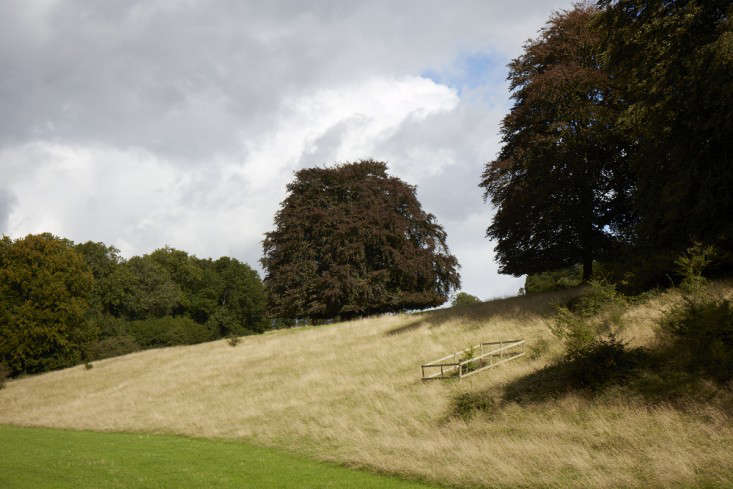Copper beech trees in England