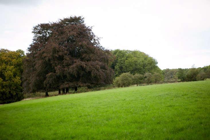 copper-beech-tree-england-12