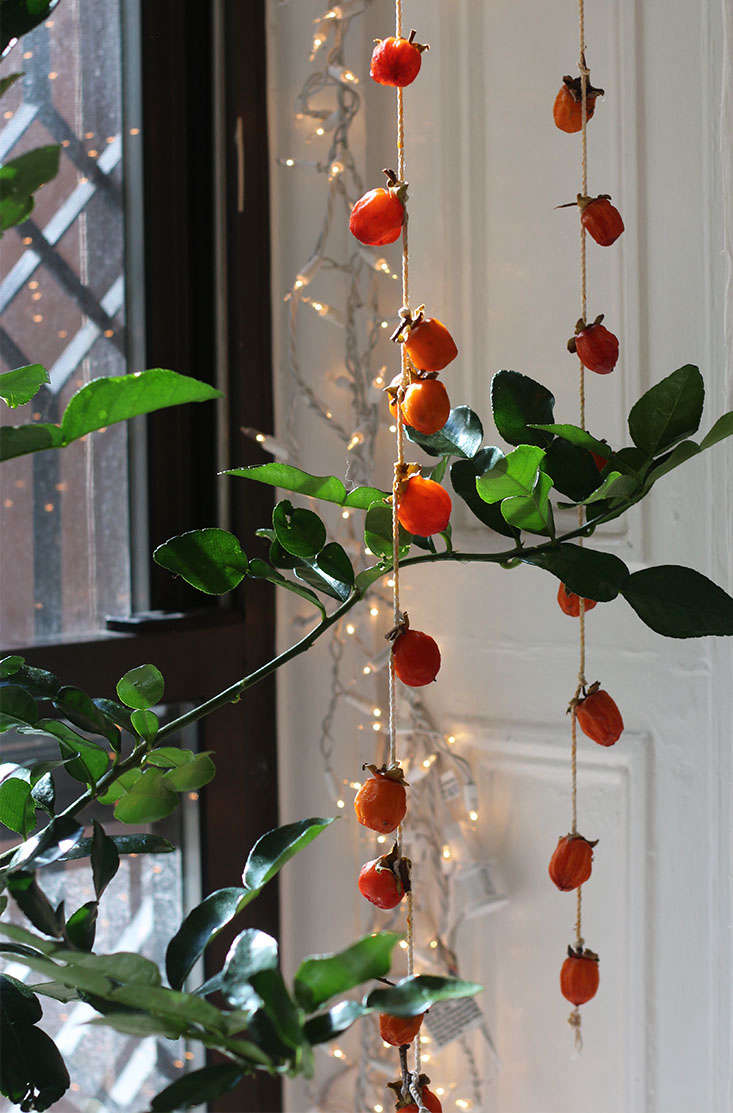I hang my drying persimmons in a sunny window (where my Thai limes are overwintering). Most traditional instructions say to suspend them from the &#8\2\20;eaves,&#8\2\2\1; but in Brooklyn we ain&#8\2\17;t got no eaves. And if left outdoors the squirrels would have a feast.