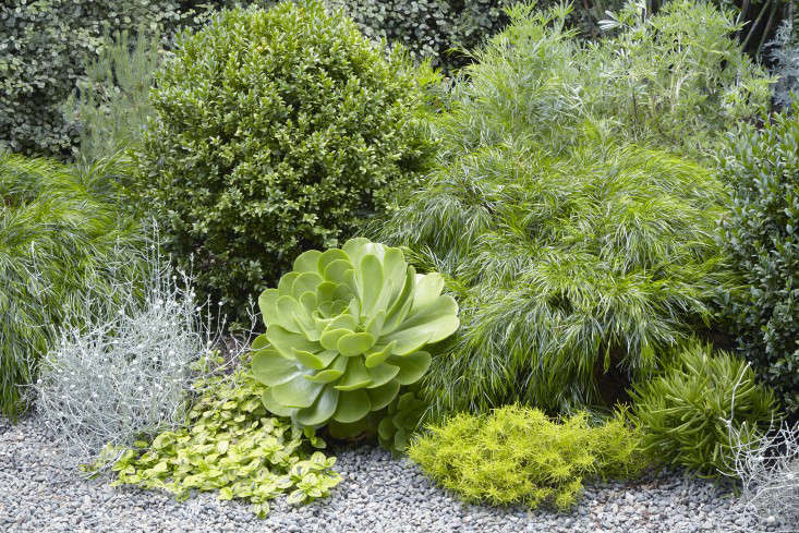 Grubb consistently turns to her low-water favorites: boxwood, acacia trees, shrubs, and pittosporum. From leftareAcacia cognata &#8