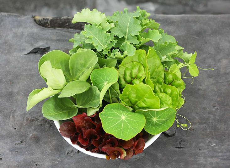 greens-to-grow-in-shade-marieviljoen