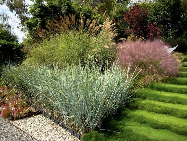 griffin-enright-grasses-closeup-gravel-santa-monica-garden-gardenista