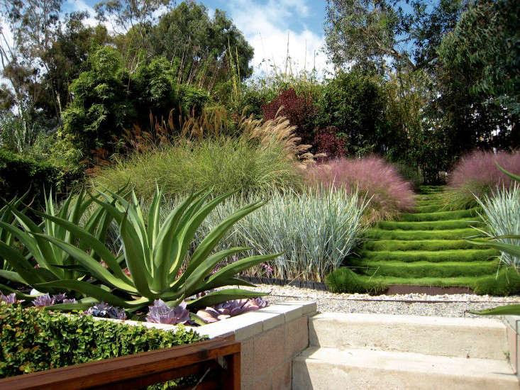 griffin-enright-succulents-grasses-stairs-santa-monica-gardenista