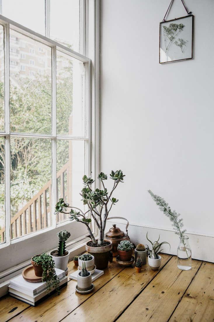house-of-plants-book-cactus-succulents