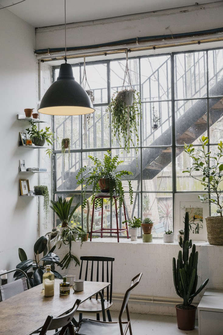 house-of-plants-metal-factory-windows