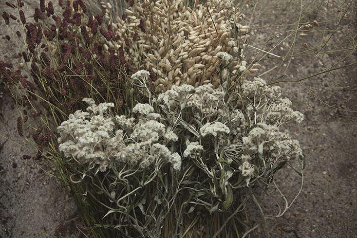 james-horner-flowers-5-sussex-