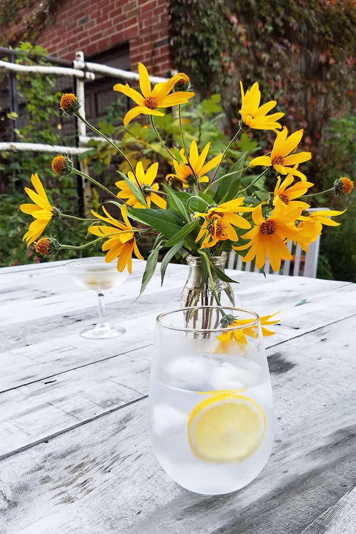 jerusalem-artichoke-flowers-marie-viljoen