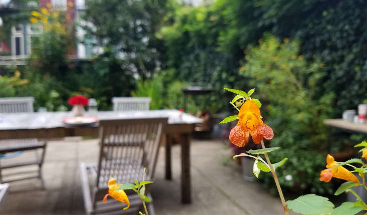 In my garden in Brooklyn jewelweed (Impatiens capensis, planted for hummingbirds) is still blooming.