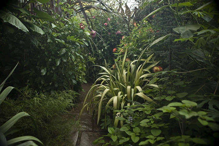 jim-powell-dixter-exotic-garden-12