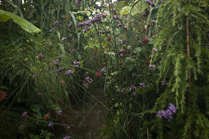 jim-powell-dixter-exotic-garden-4