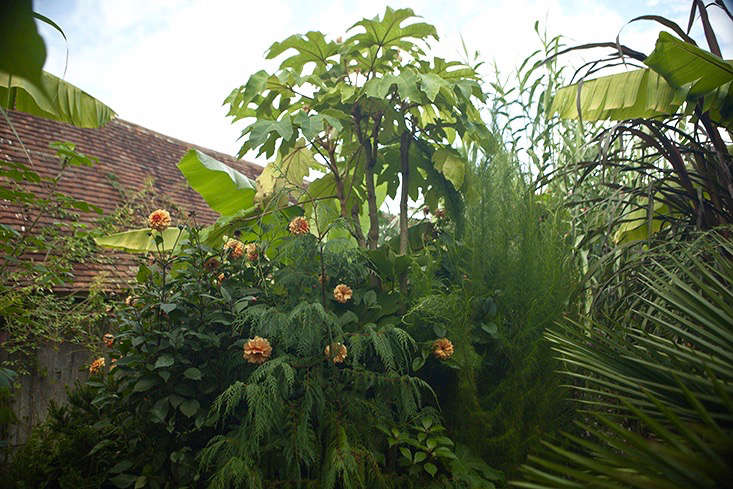 jim-powell-dixter-exotic-garden-6