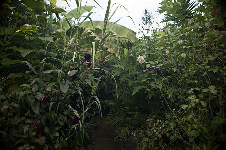 jim-powell-dixter-exotic-garden-9