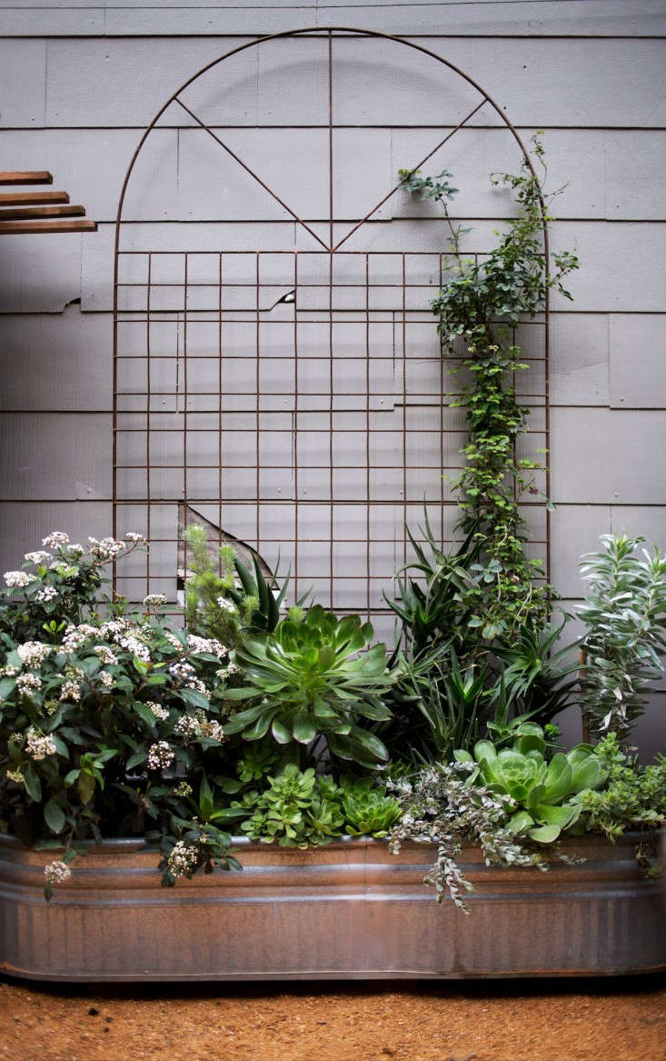 For more, see Shopper&#8\2\17;s Diary: Lila B. Designin SF&#8\2\17;s Mission District. Photograph by Liesa Johannssen for Gardenista.