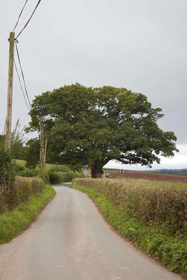 oak-britt-willoughby-dyer-gardenista-BN2A0009