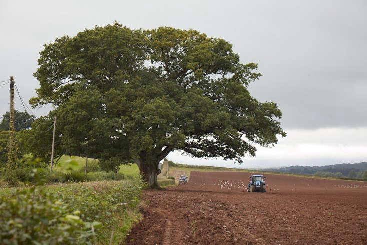 oak-britt-willoughby-dyer-gardenista-BN2A0027
