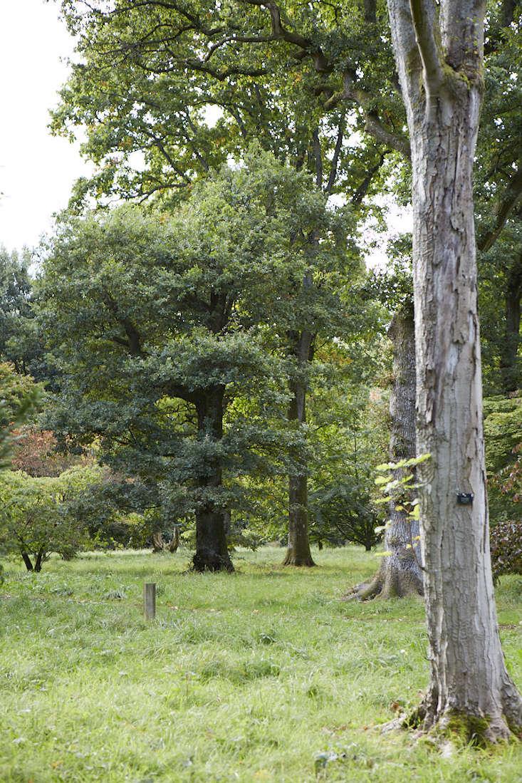 oak-britt-willoughby-dyer-gardenista-BN2A0246
