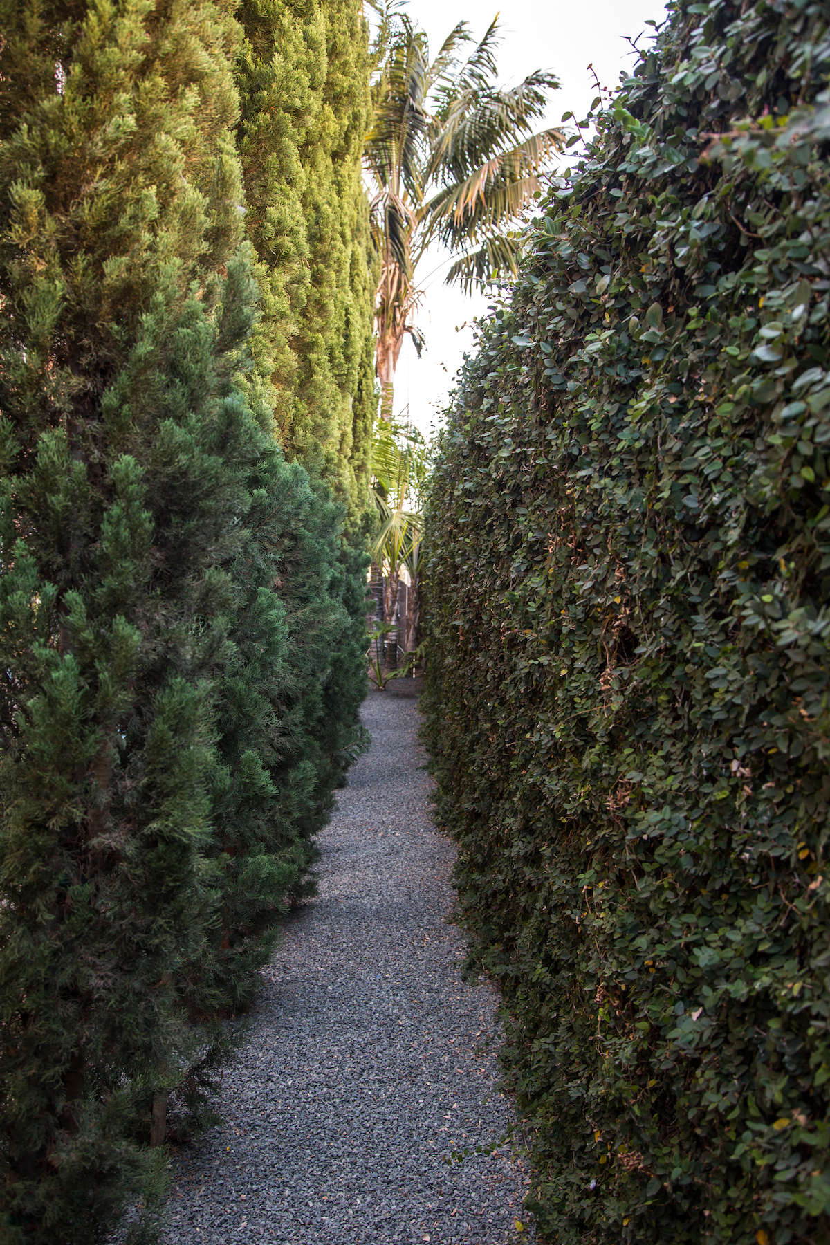 Row of cypress trees and garden perimeter wall covered in vines