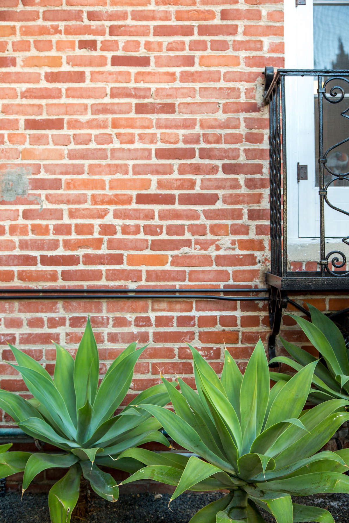 Large succulents in front of brick wall with black painted pipes
