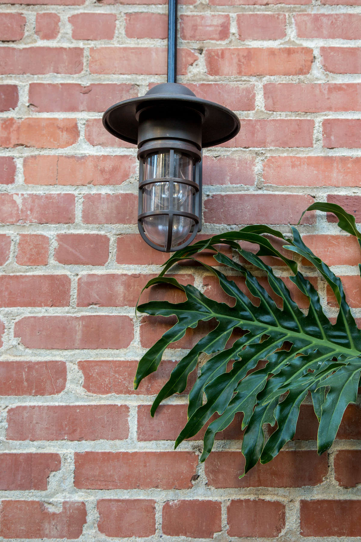 Nautical outdoor lantern with tree frond on brick wall