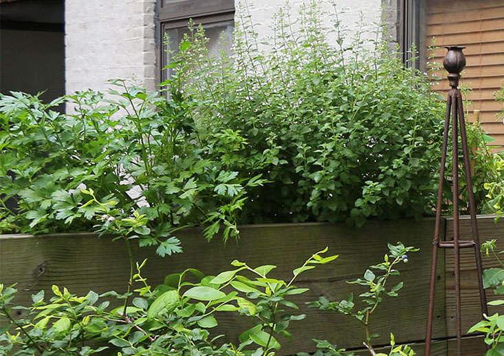 parsley-for-shade-marieviljoen