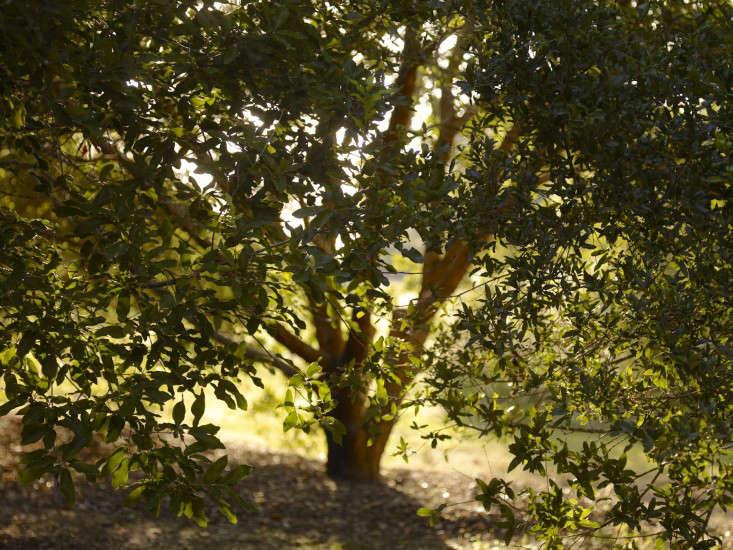 peckerwood-oad-tree-marie-brenner