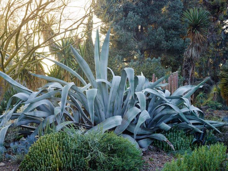 ruth-bancroft-agave-marion-brenner