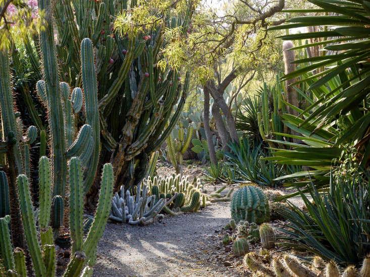 ruth-bancroft-succulents-gravel-path-marion-brenner-bold-dry-garden