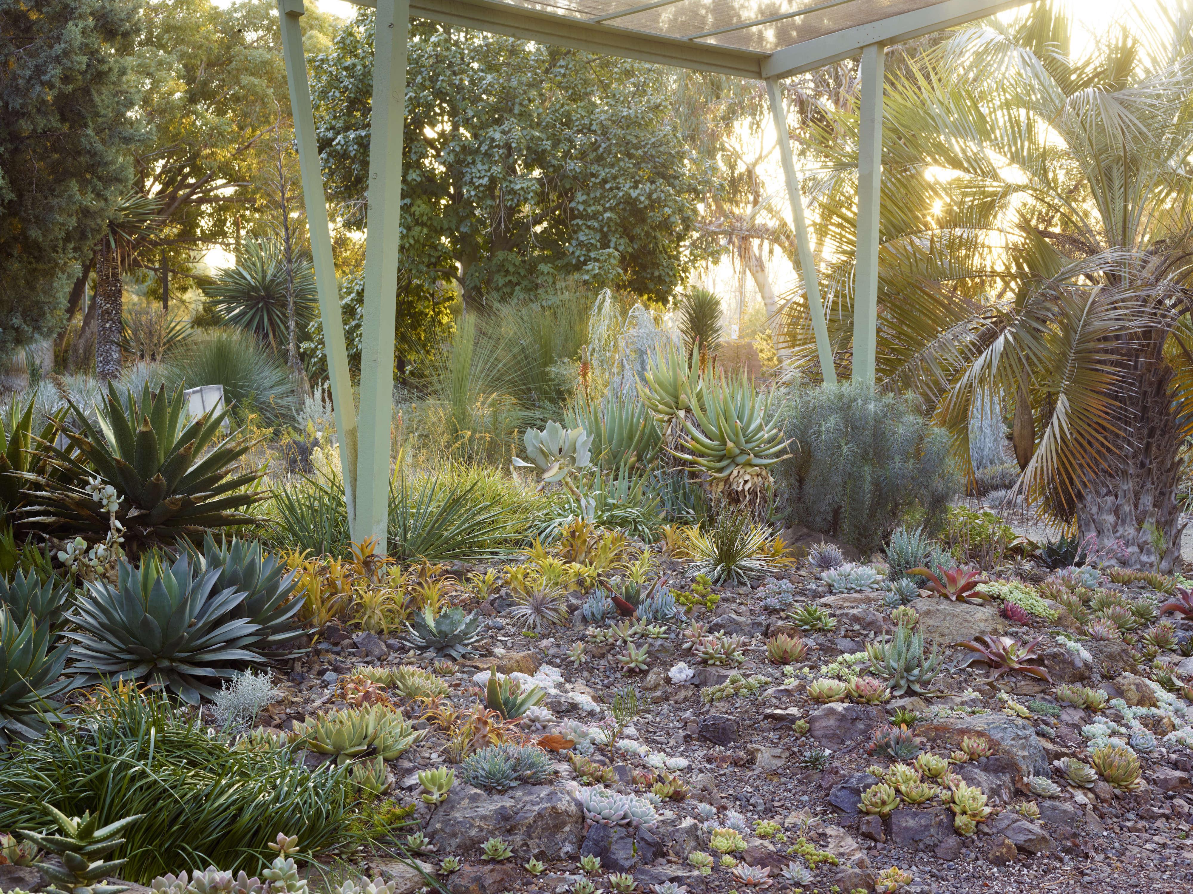 ruth-bancroft-succulents-rock-garden-marion-brenner-dry-bold-garden