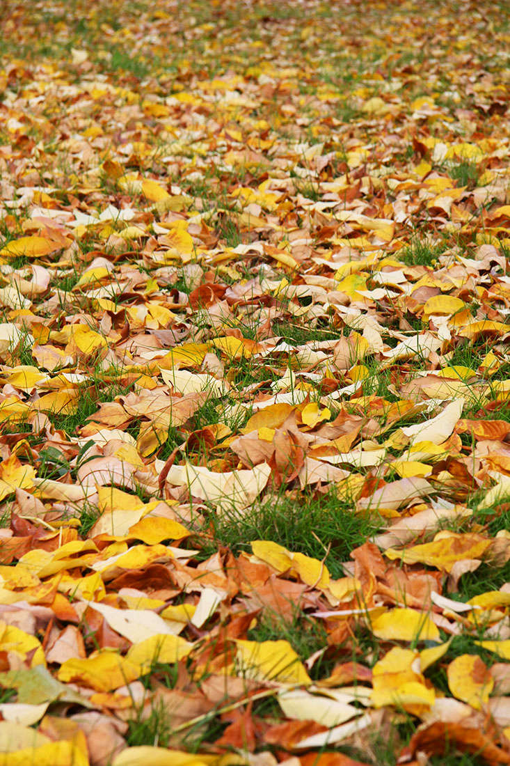 Collect fallen leaves and layer them in your compost pile, or keep a leaf-only pile. For large amounts of leaves, shred them to speed decomposition. Or simply scatter a layer of leaves over your planting beds as a light mulch.