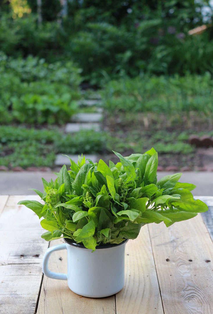 spinach-grows-in-shade-marieviljoen