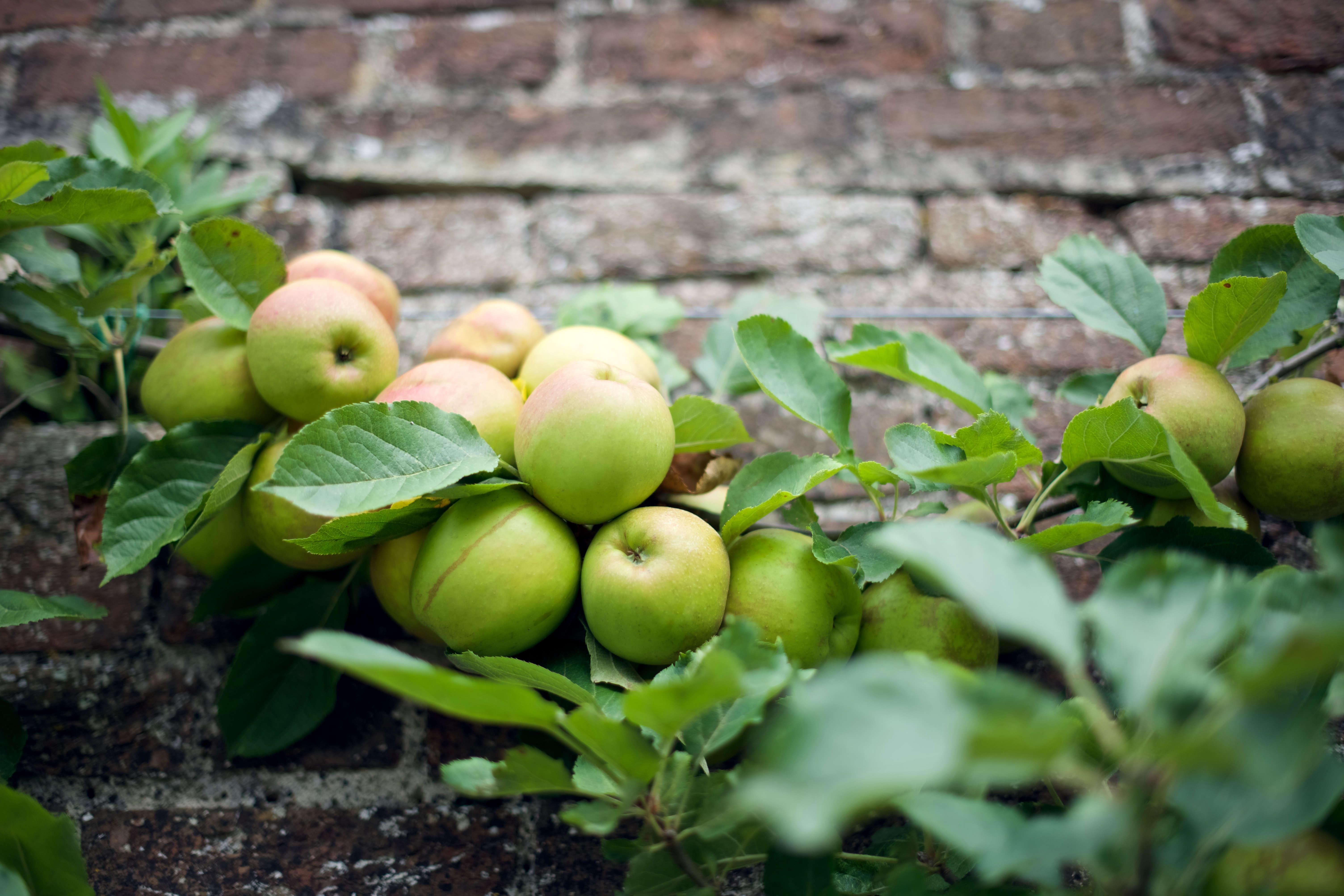 the-pig-apple-tree-will-venning-gardenista-11