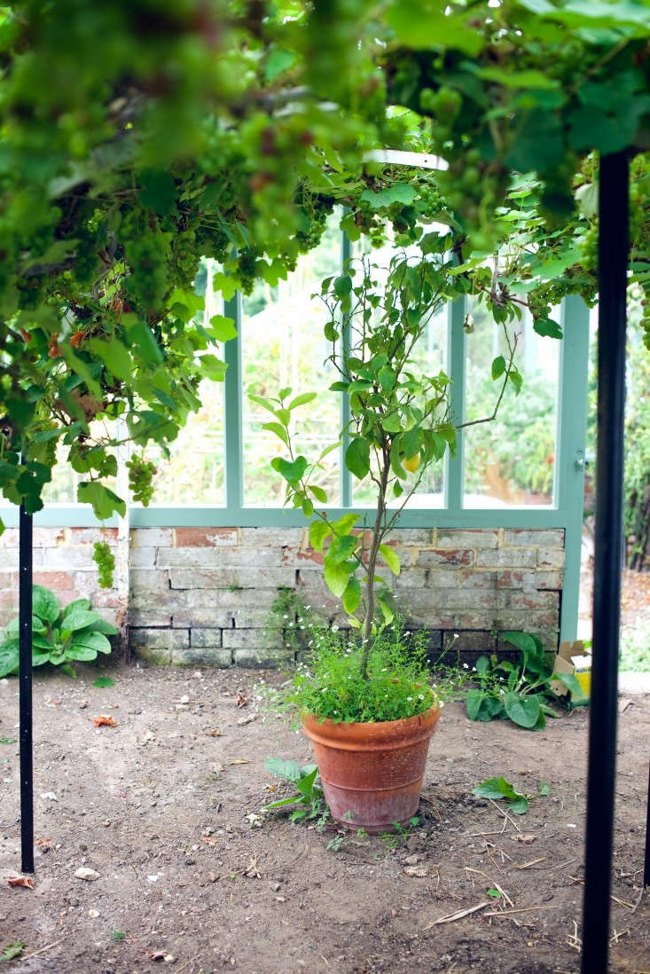 Photograph by Will Venning. For more, see Garden Visit: The Kitchen Gardens at the Pig Hotel, Combe.