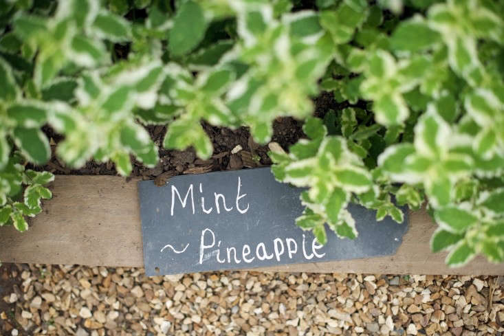 See more of one of England&#8\2\17;s loveliest country house edible gardens at Garden Visit: The Kitchen Gardens at The Pig Hotel, Combe. Photograph by Will Venning.