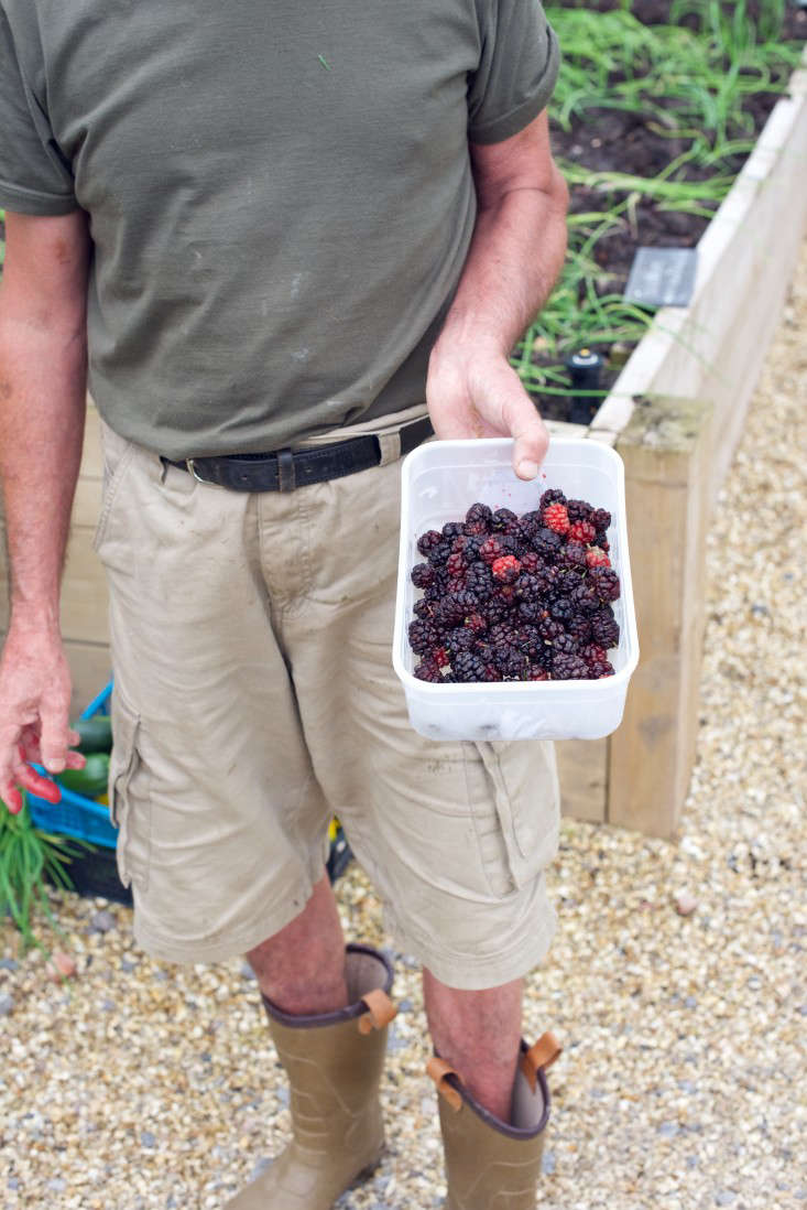 Mulberries, The Pig, Combe