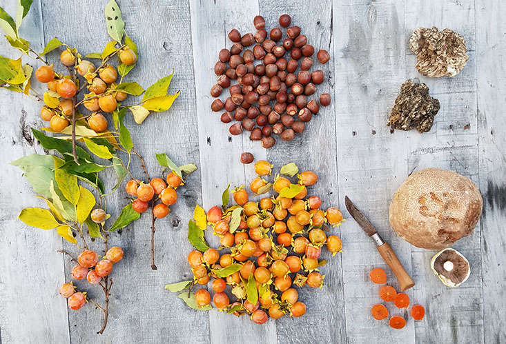 It is a lucky forager who goes out hunting for mushrooms and acorns and comes home with a sackful of indigenous tree candy, golf ball-sized or smaller, but luscious when ripe.