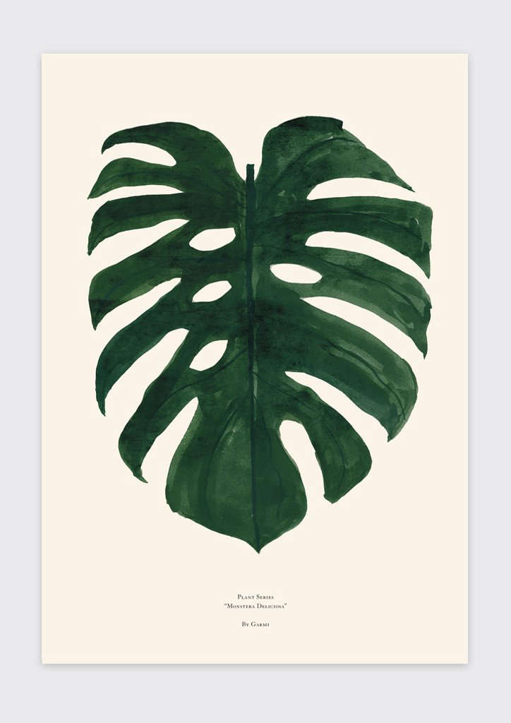 Monstera Deliciosa Growing And Design Tips For A Tropical Houseplant This list is not exhaustive and it only intends to help as a reference. monstera deliciosa growing and design