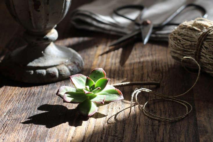 Echeverias echeveria-bouquet-materials-supplies