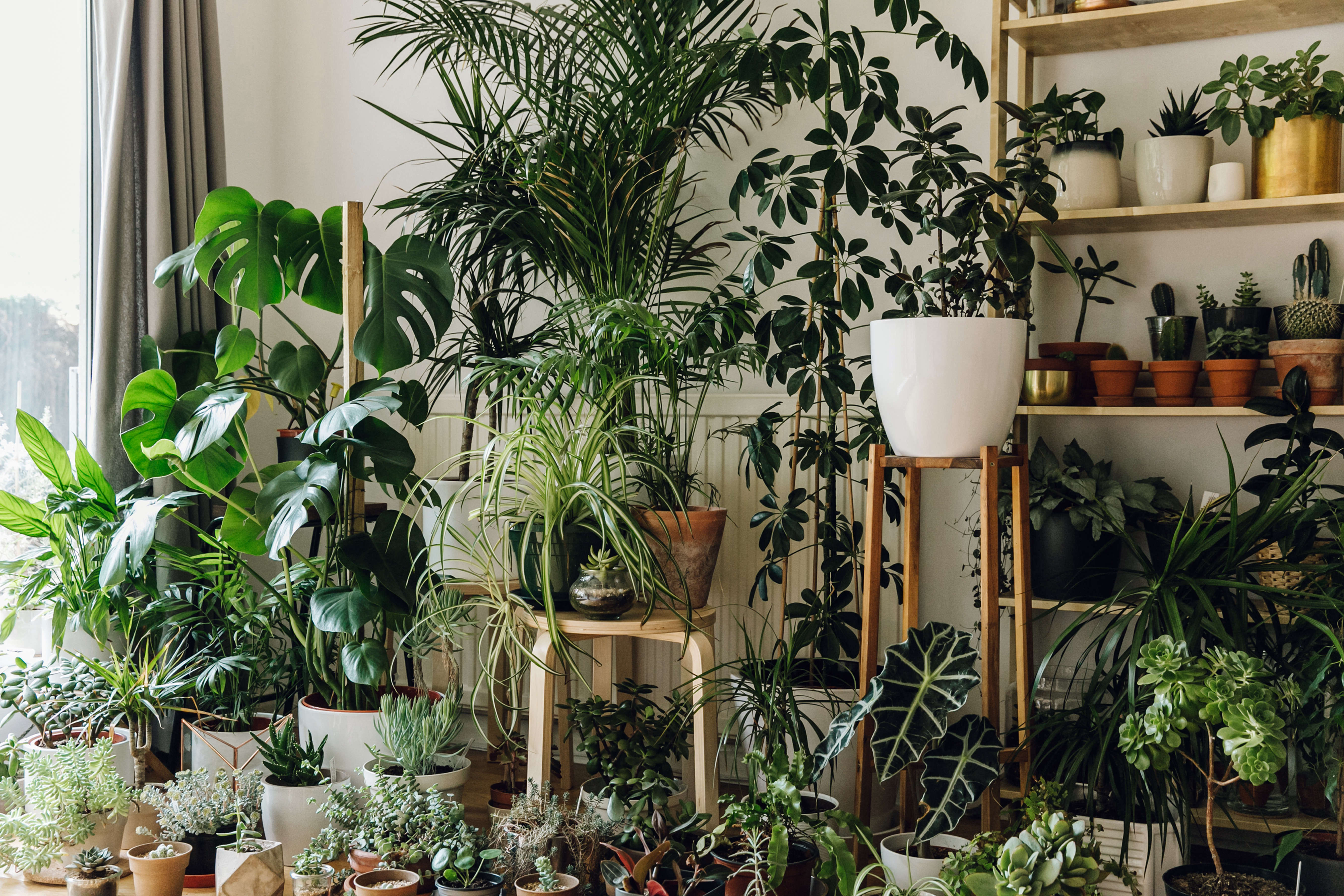 Evergreen Book Harken Plants on Shelves