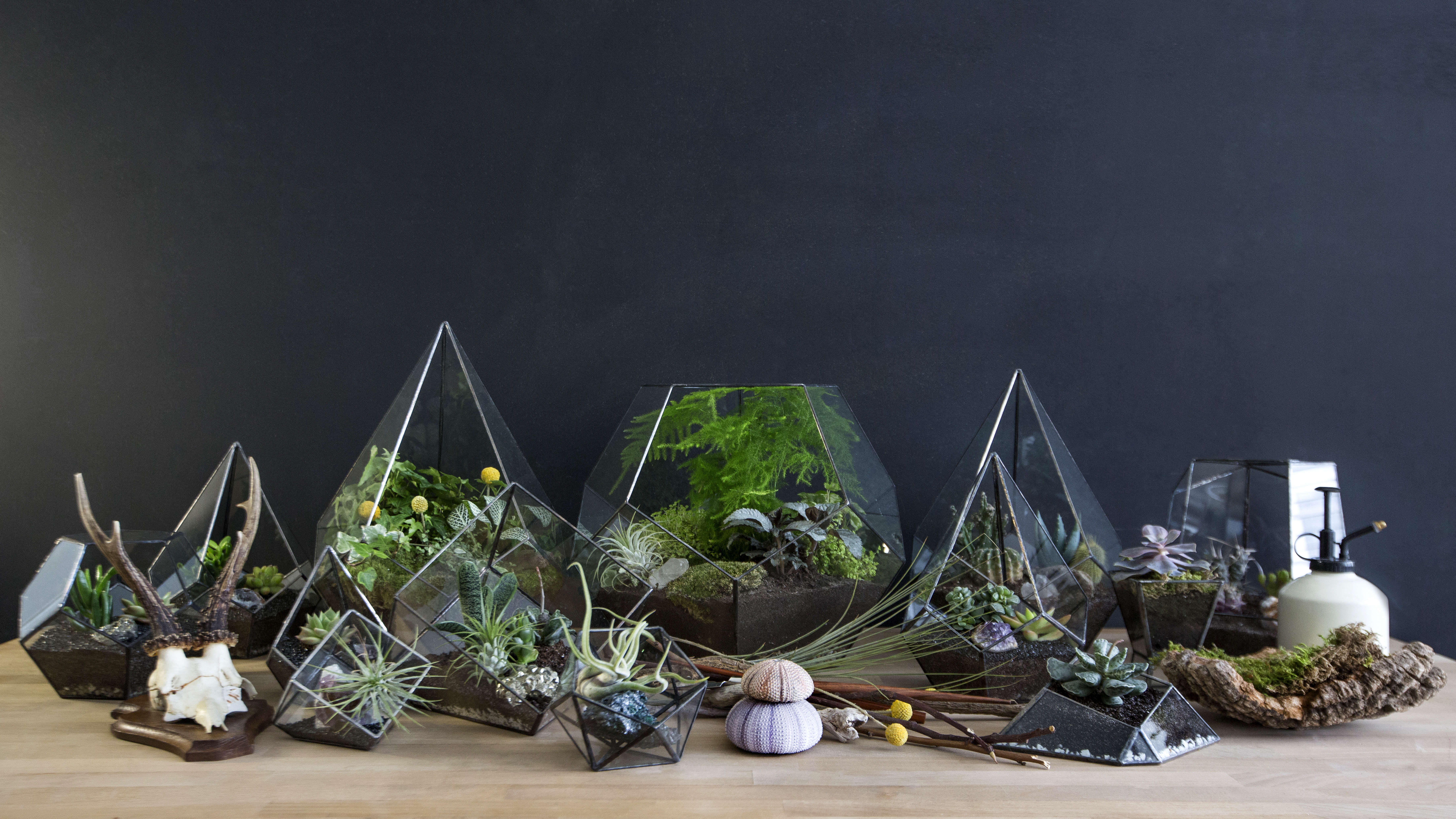 Evergreen Living with Plants Muz Botanik Kahle Vases in Turkey, Photo by Maurizio Braggiotti
