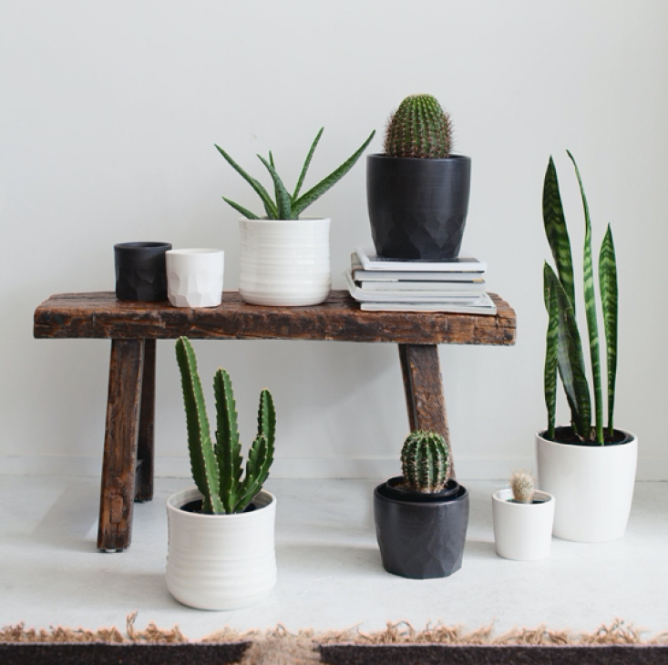 Ceramic planters by Form & Fable hold desert-style houseplants, including Sansevieria (far right).